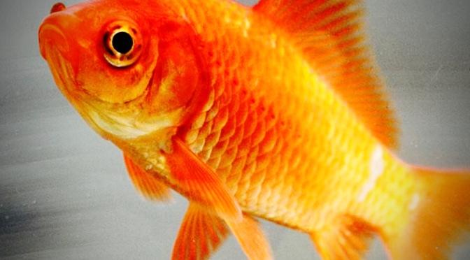 Et si nous n'étions pas des poissons ?